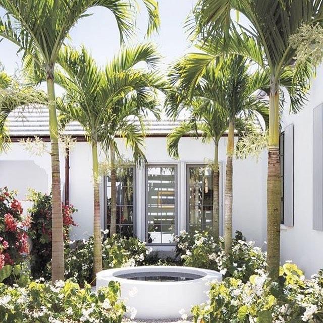 Garden goals! #palmtrees #palms #california #ranch #beachhouse #beach