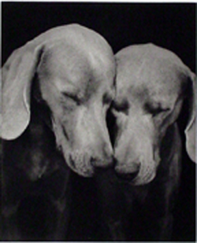 William Wegman, Reflectional, 2002, 2-color photogravure (6/45), Graphicstudio Subscription Purchase through the Kent Harrison Memorial Acquisition Fund, Polk Museum of Art Permanent Collection 2002.15.3 © Wegman World