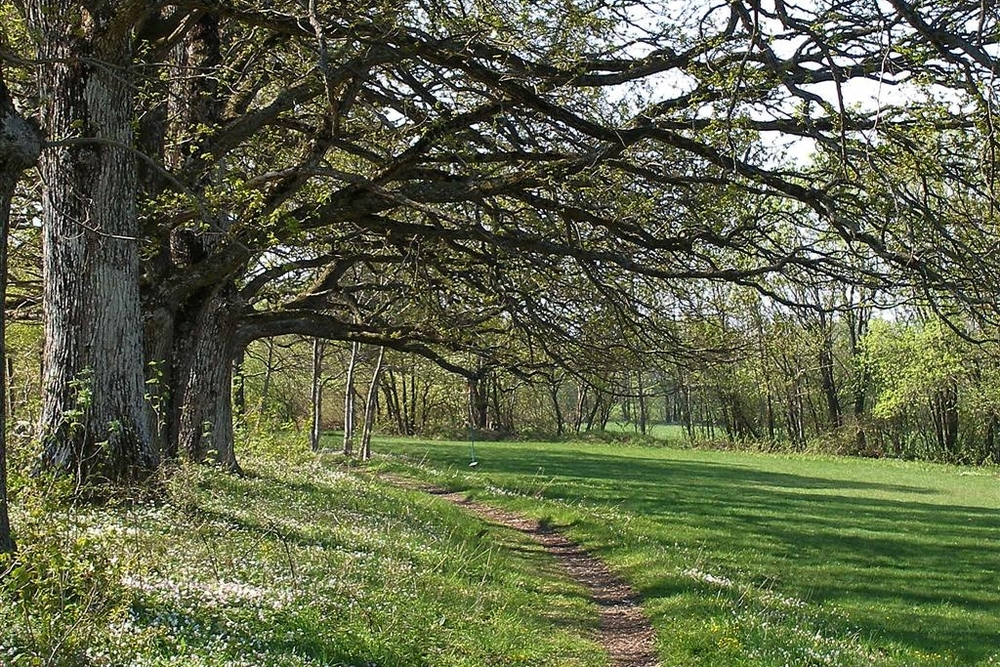 Vakre trær og fine turveger