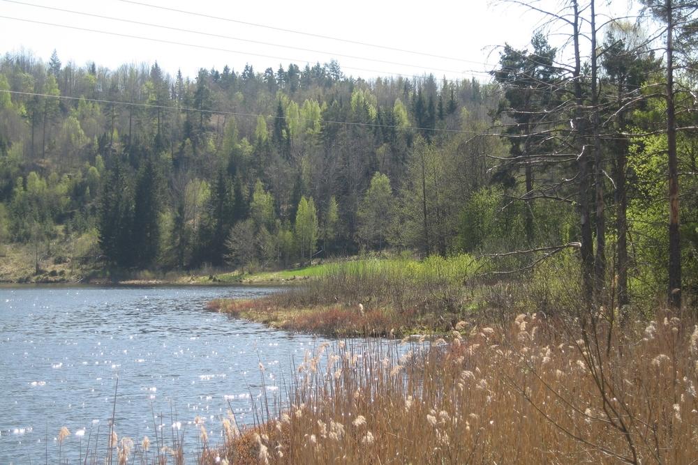 Våtmark og sivstrender