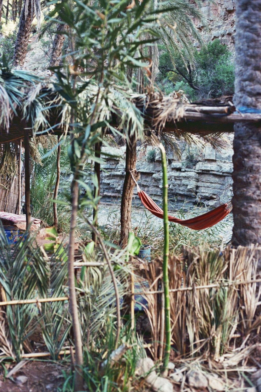 Jungle hammock .jpg