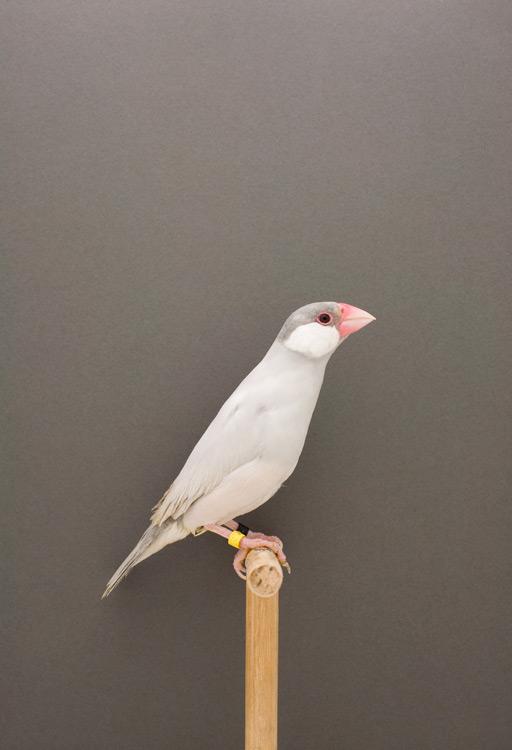 Bird03.jpeg