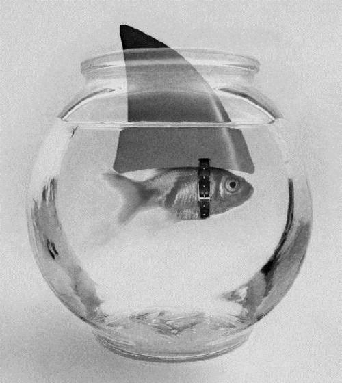 FishShark.jpeg