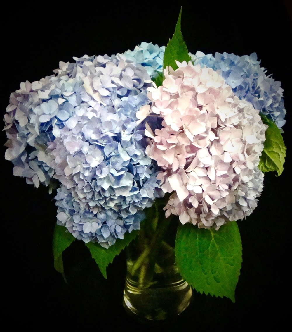 flowers - 1.jpg