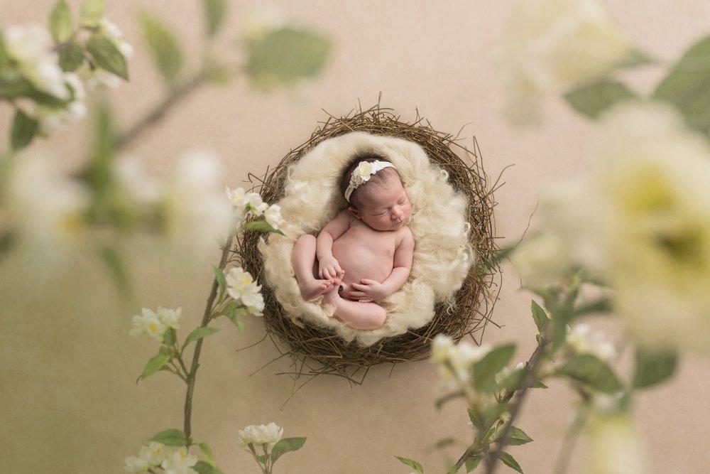 newborn girl in nest.jpg