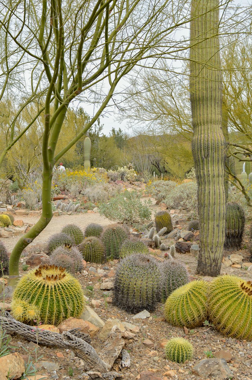 Tucson 2019 (19 of 94).jpg