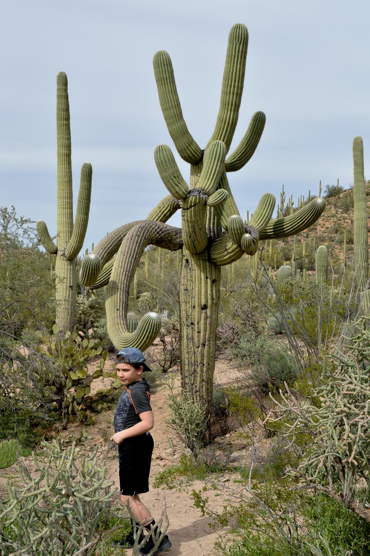 Tucson 2019 (31 of 94).jpg