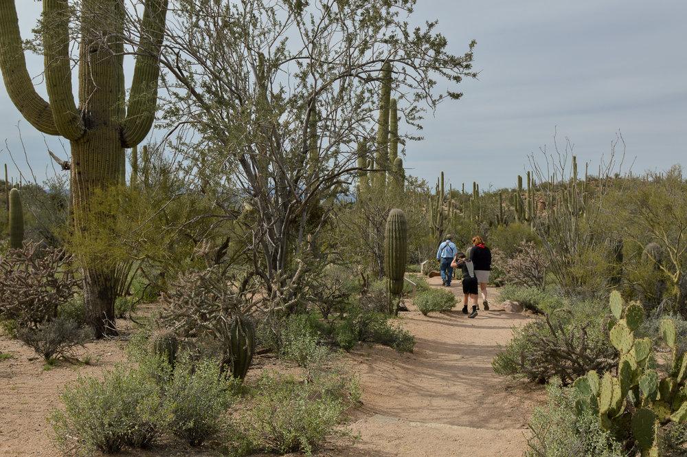 Tucson 2019 (35 of 94).jpg