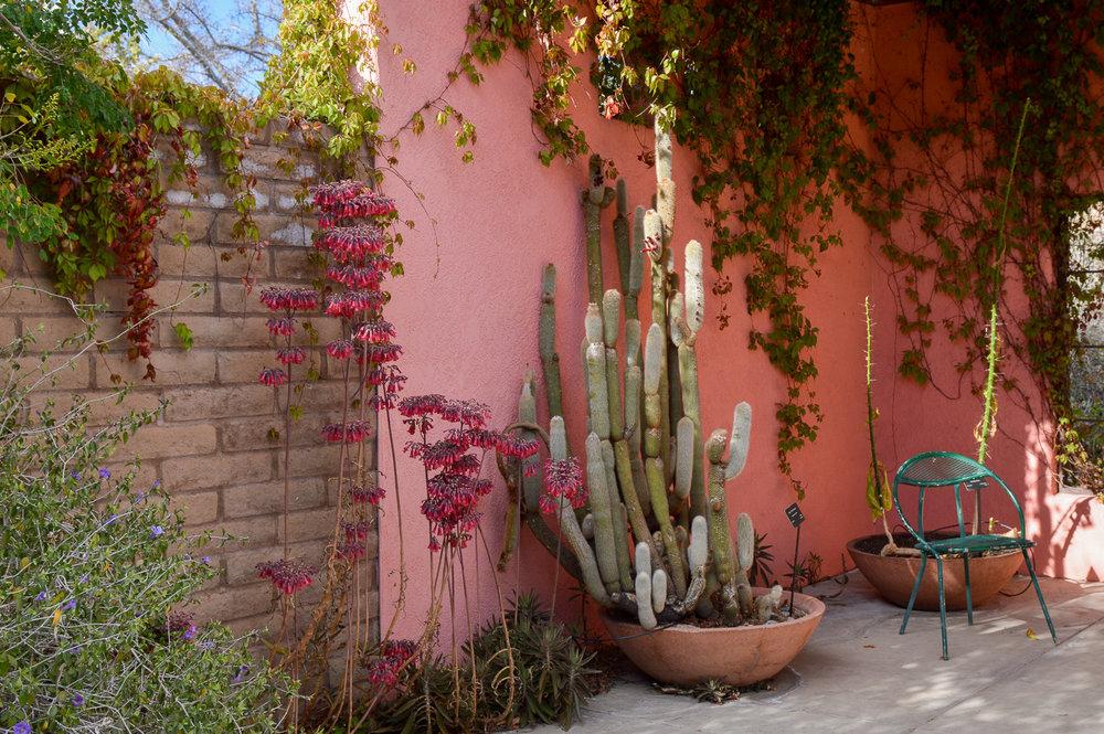 Tucson 2019 (78 of 94).jpg