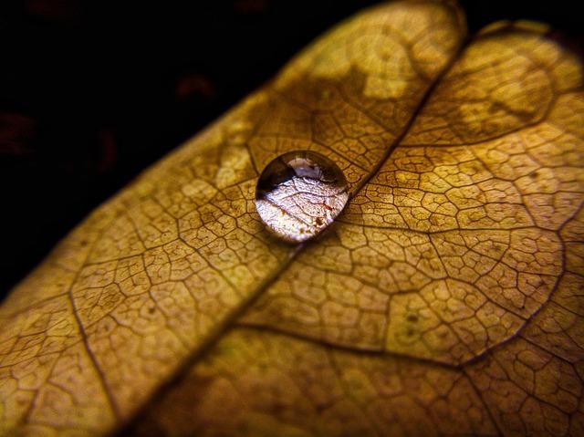 droplet-2967499_640.jpg