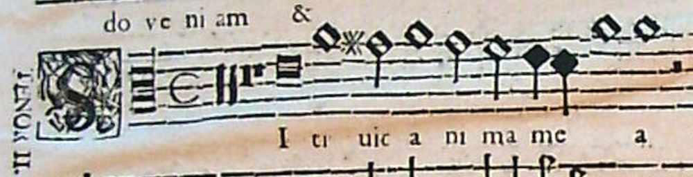 cardoso-sitivit