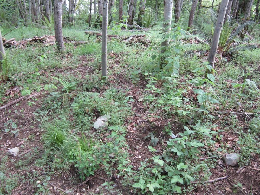 After planting (1) (Large).JPG