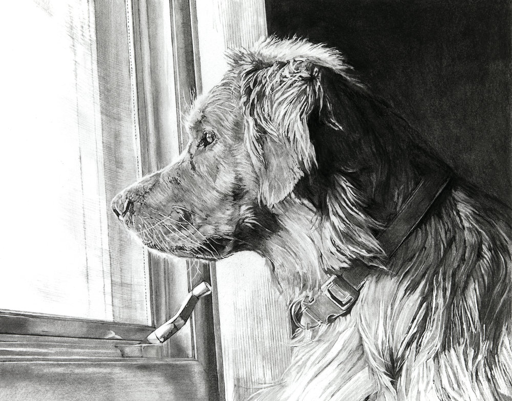 "Golden Retriever named Thor, 11""x14"""