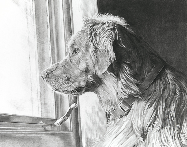 "11""x14"" charcoal dog drawing"