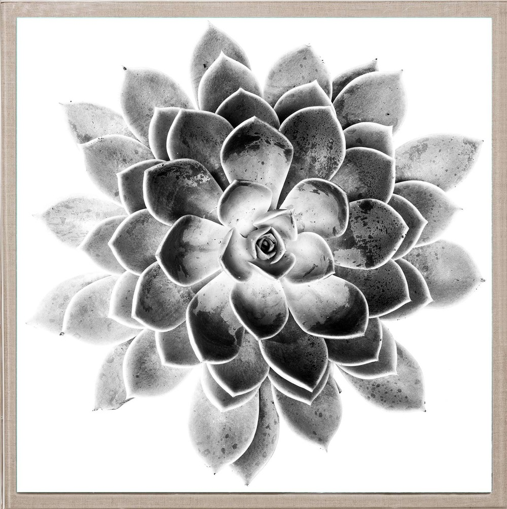 Natural Curiosites Black and White Succulent 2