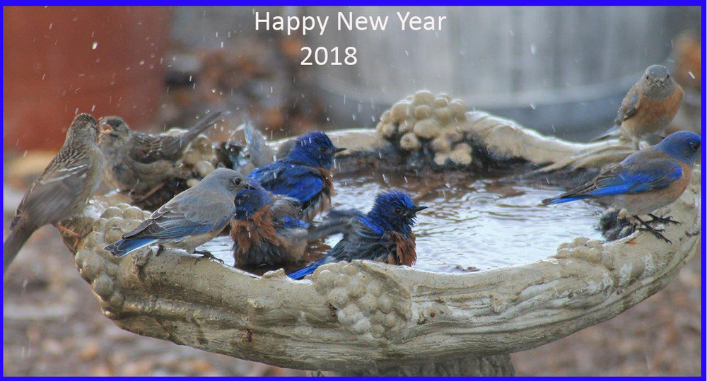 Blue Birds First Dip of 2018.jpg