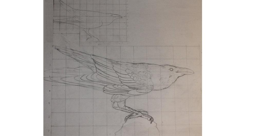raven drawing 3.jpg