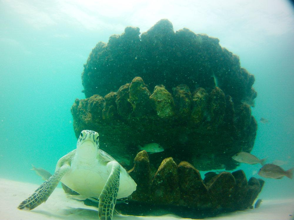 RS10332_Sea Turtle Reef - Grayton Beach - South Walton FL.jpg