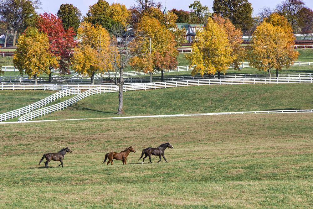 Thoroughbred farm in the fall.jpg