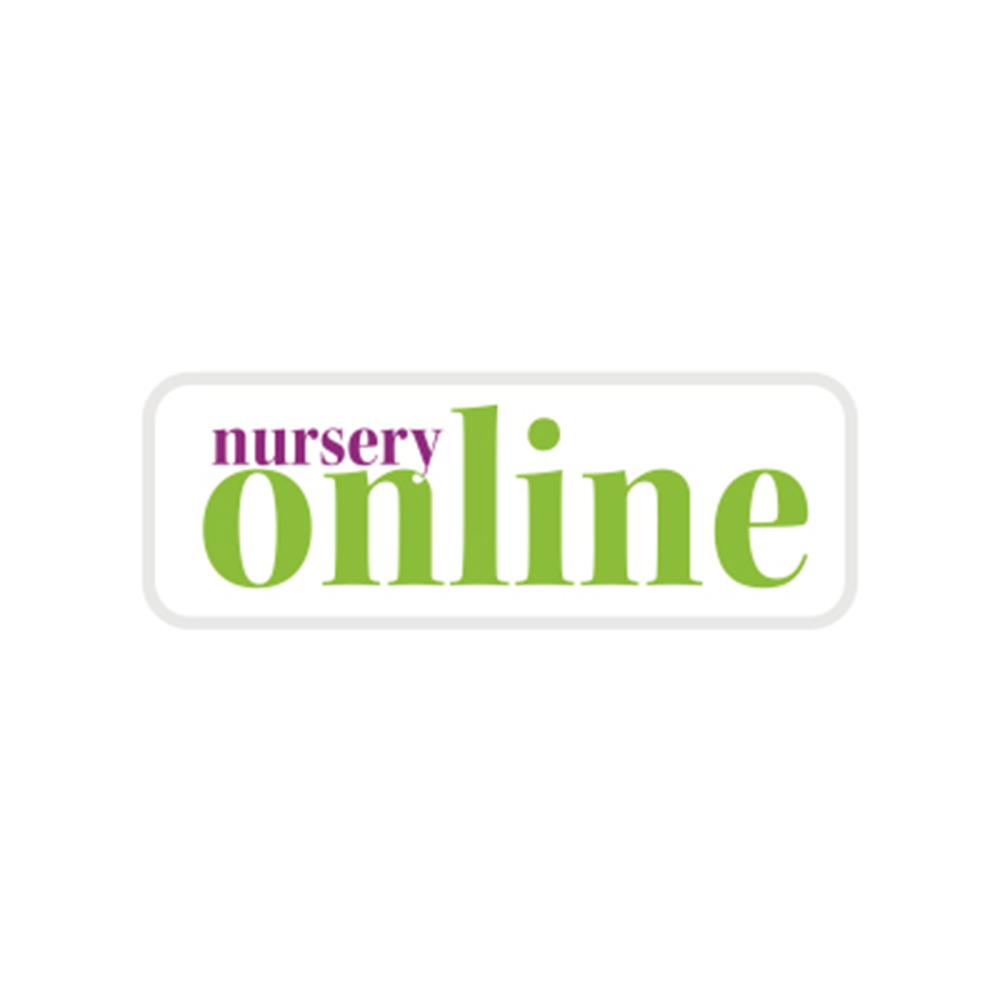 nursery online.jpg