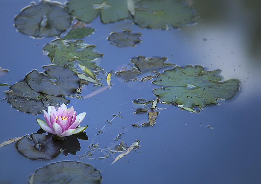 r_MG_6976_France_Monets Garden.jpg