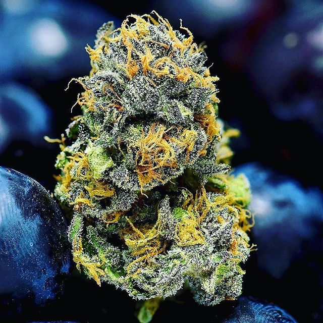 TOP SHELF SUNDAY! DEALS ON ALL GRAMS!! 🔥🔥🔥🔥🔥 #420 #cannabis #weedstagram #ganja #highsociety #maryjane #kush #highlife #cannabiscommunity #hightimes #high #weedporn #dank #girl #dope #love #instagood #pothead #stayhigh #fun #losangeles #bestbuds #follow #trees #blaze #wonderland #girlswhosmoke #topshelf #gsc #purps