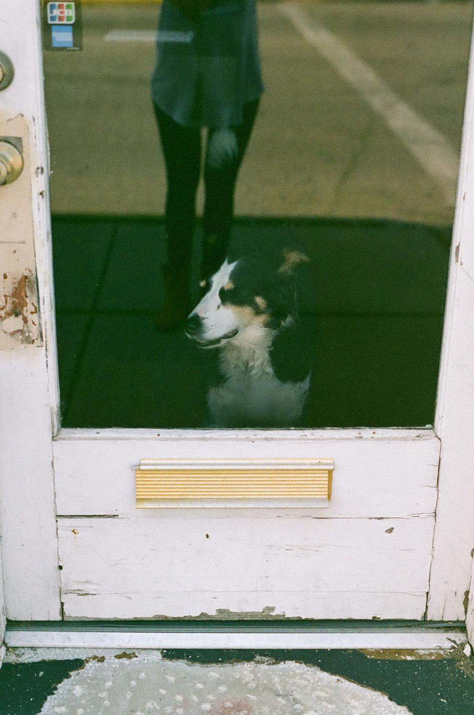 Seattle Film Works Photowalk - Bellbrook, Ohio - Dog in a shop