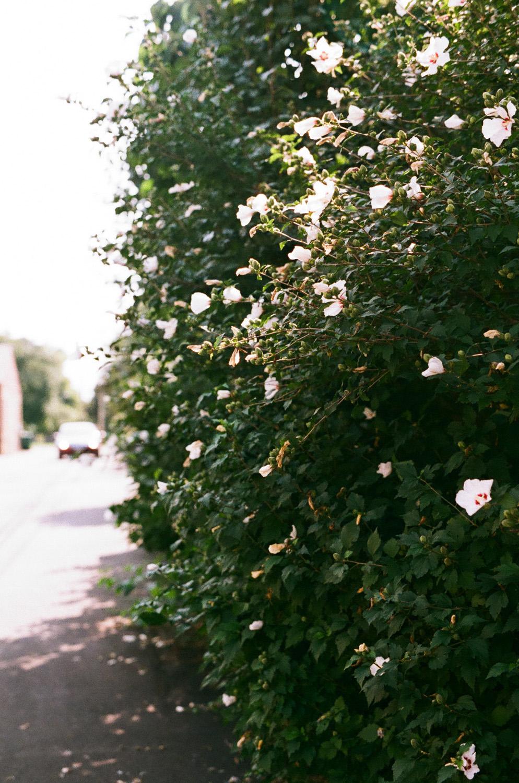 Seattle Film Works Photowalk - Bellbrook, Ohio - Flowering Shrubs