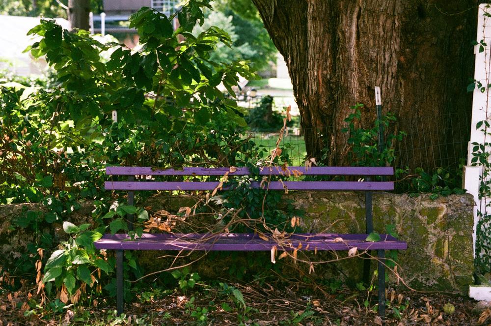 Seattle Film Works Photowalk - Bellbrook, Ohio - Purple Bench