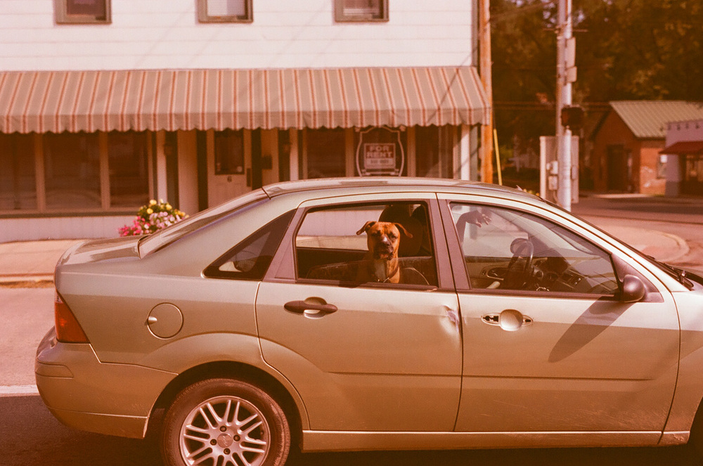 Seattle Film Works Photowalk - Bellbrook, Ohio - Dog in a car