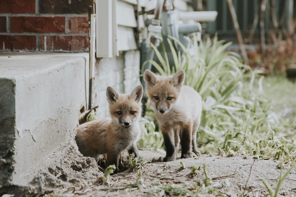 FOXY -