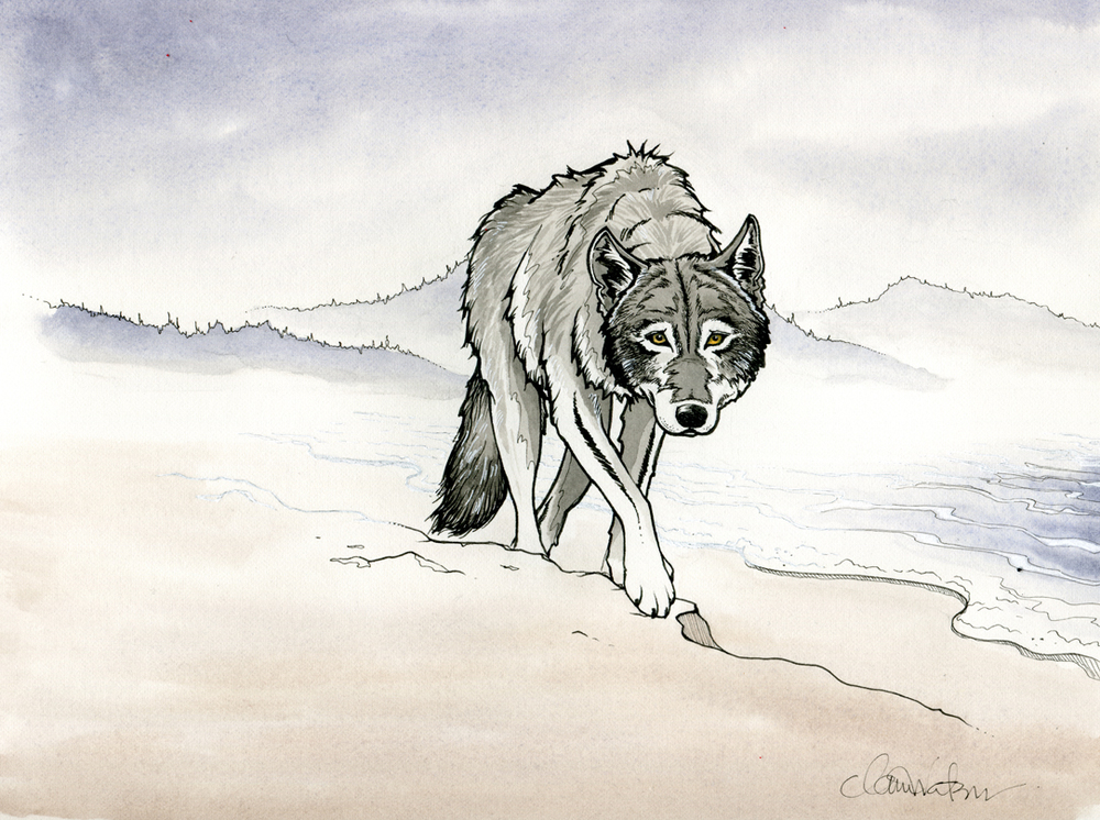 Wolf In The Fog, Tofino BC