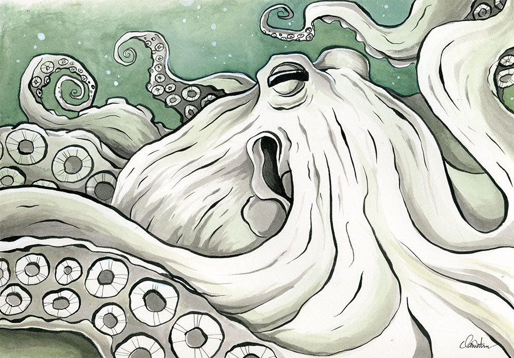 Giant Pacific Octopus, Tofino BC