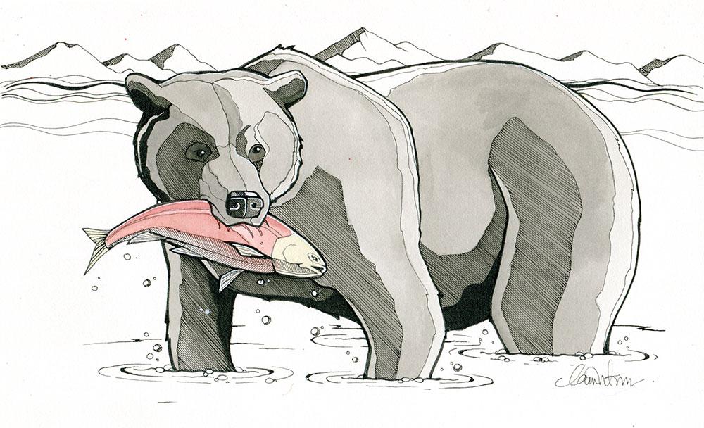 Bear and Salmon, Tofino BC