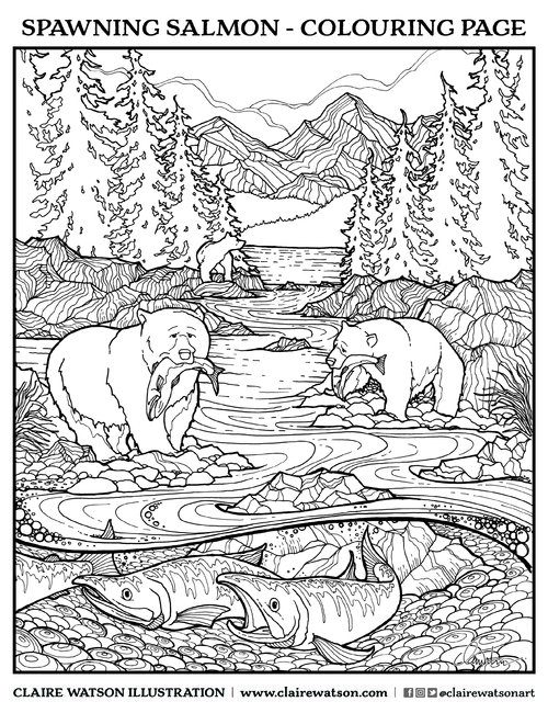 spawning salmon downloadable colouring page claire watson tofino artist illustrator and graphic designer