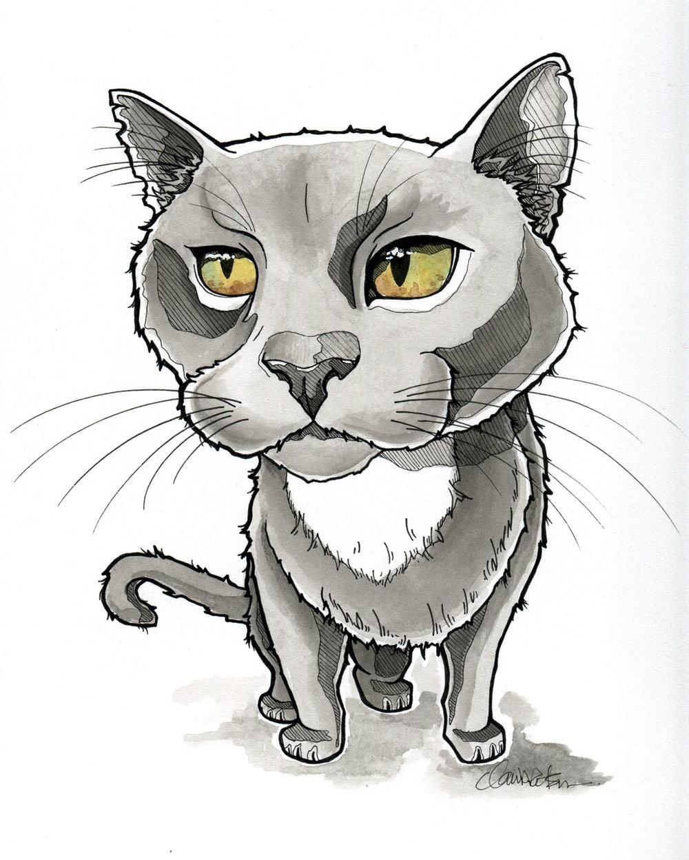 cat_illustration-claire-watson.jpg