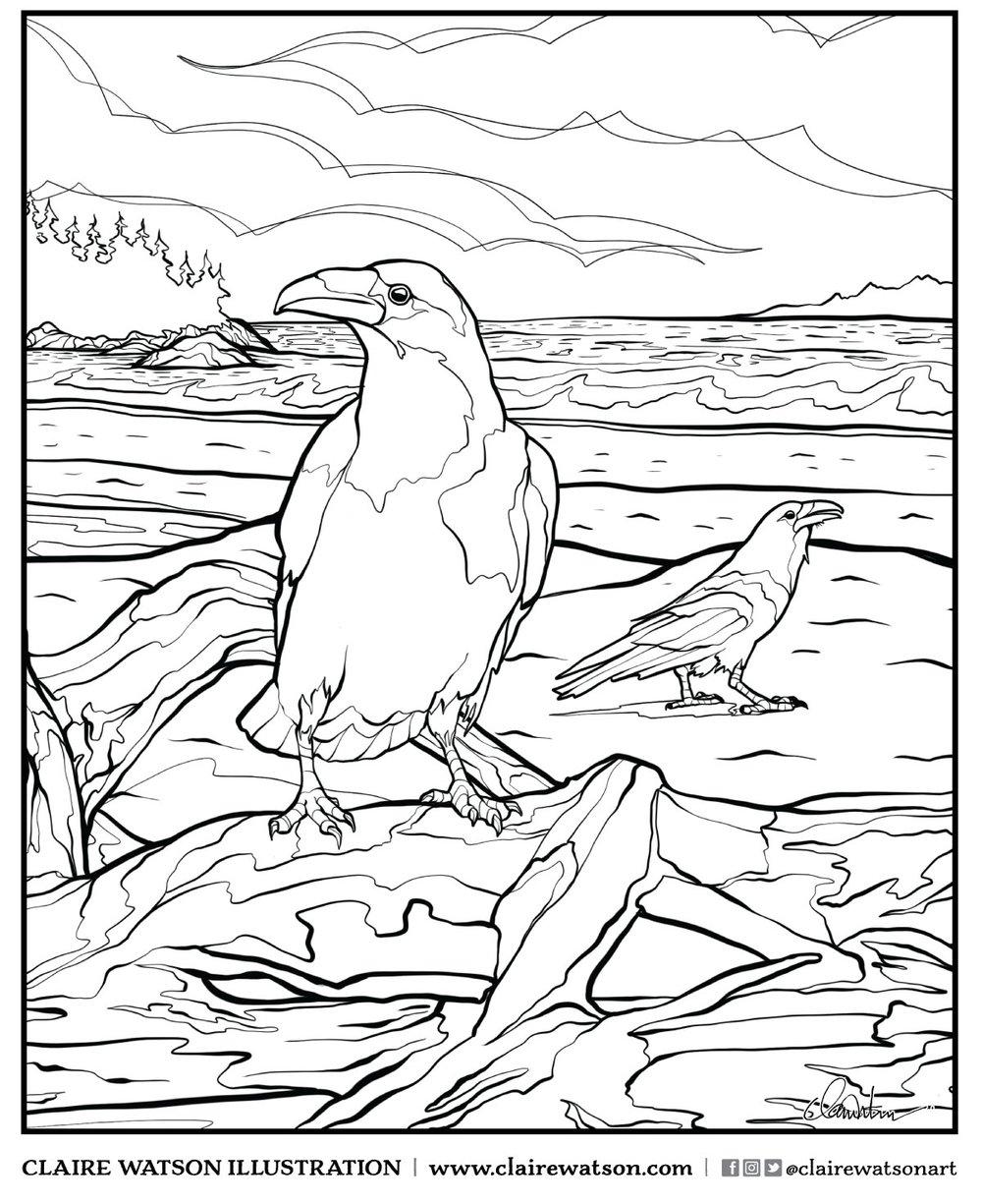 Coastal Ravens
