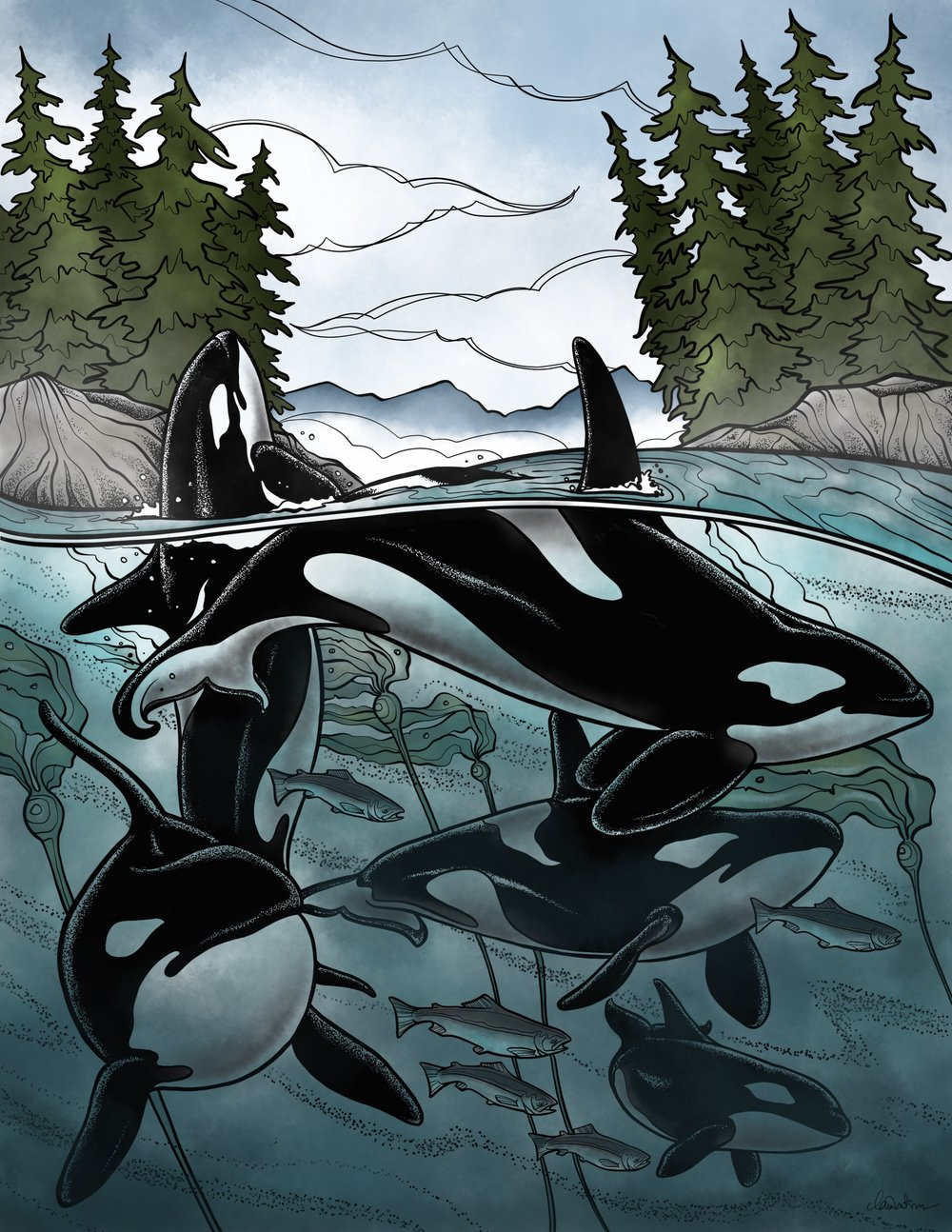 West Coast Orcas