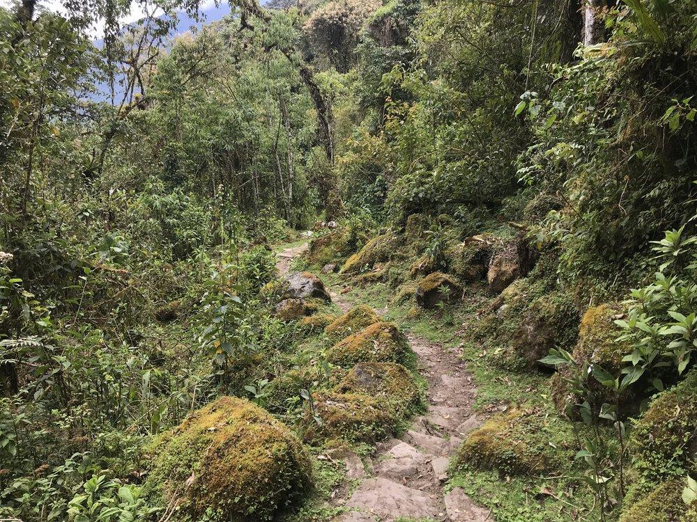 Inca road in the Vilcabamba.JPG
