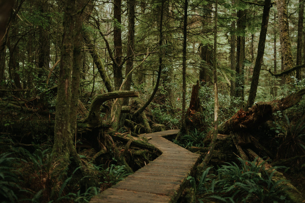 Rainforest-Trail-02.jpg