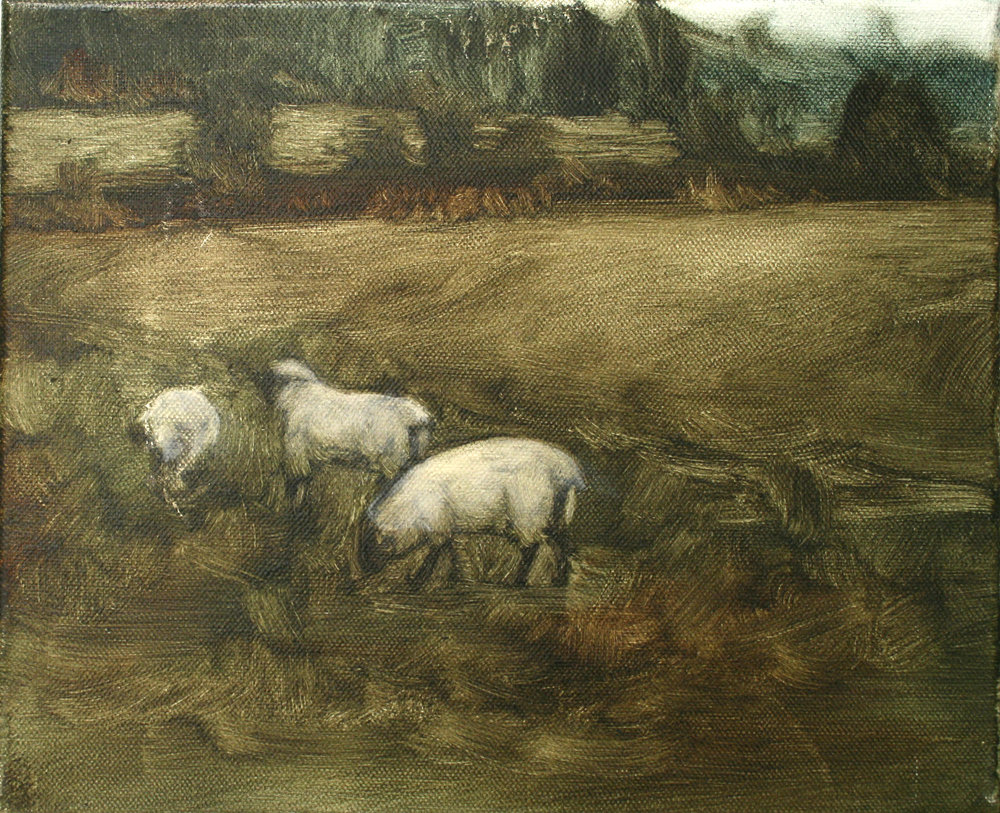 "Sheep Study 2, oil on canvas 30 x 24.5 cm (12"" x 9.5""), 2016"