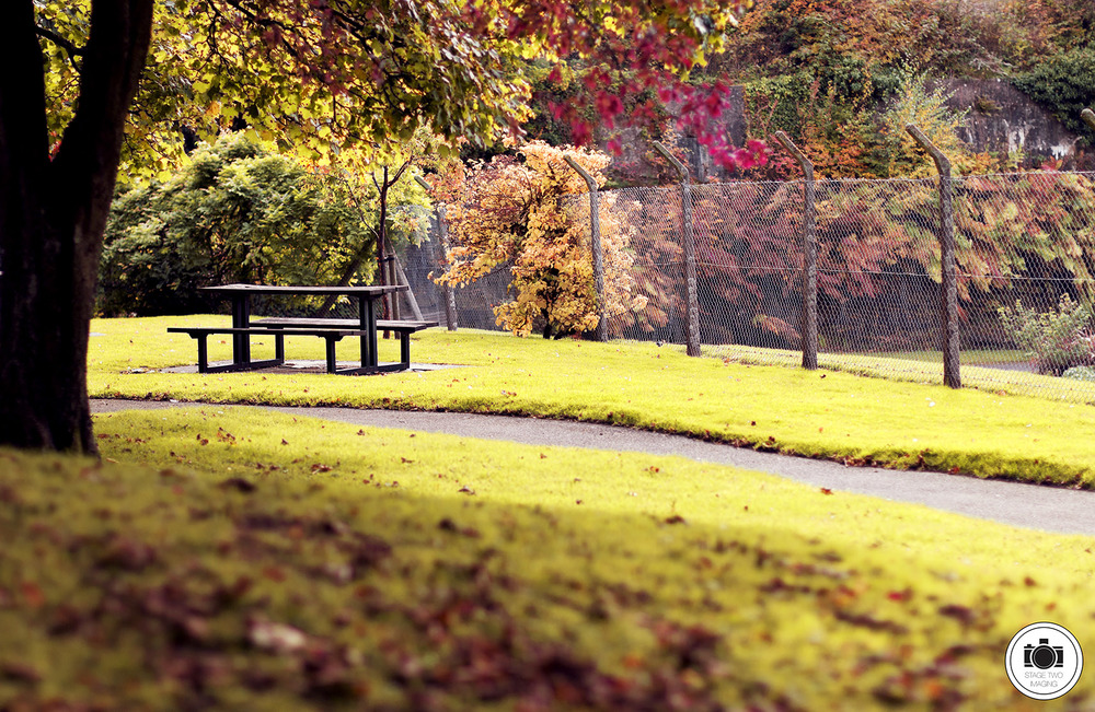 Castledykes bench with logo web.jpg