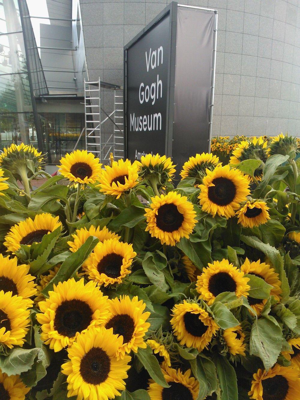 Van Gogh Museum P Walker (1).jpg