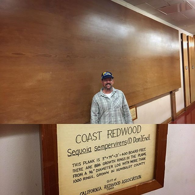 Stopped by Berkeley yesterday to see their wood wall displays of slabs of different wood species. Did you know Berkeley had a saw mill at their university? #redwood #sequoyah #friendlygiants