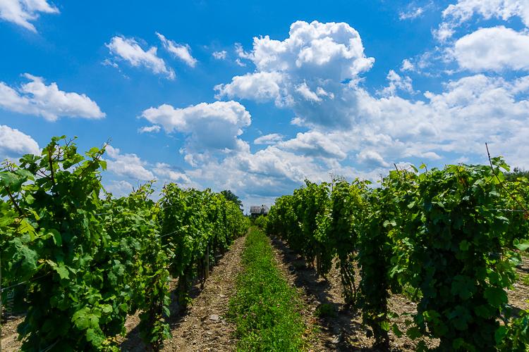 Finger Lakes Vineyards.jpg
