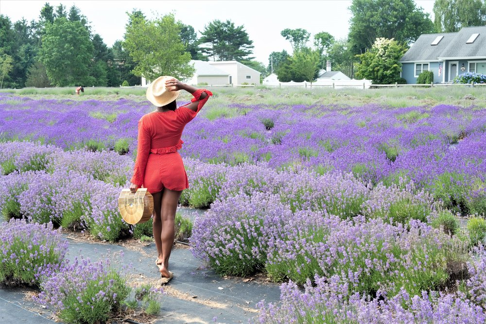 Lavender by the Bay Farm