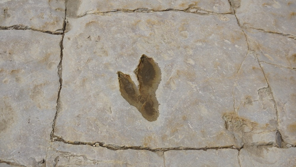 Partial Theropod footprint