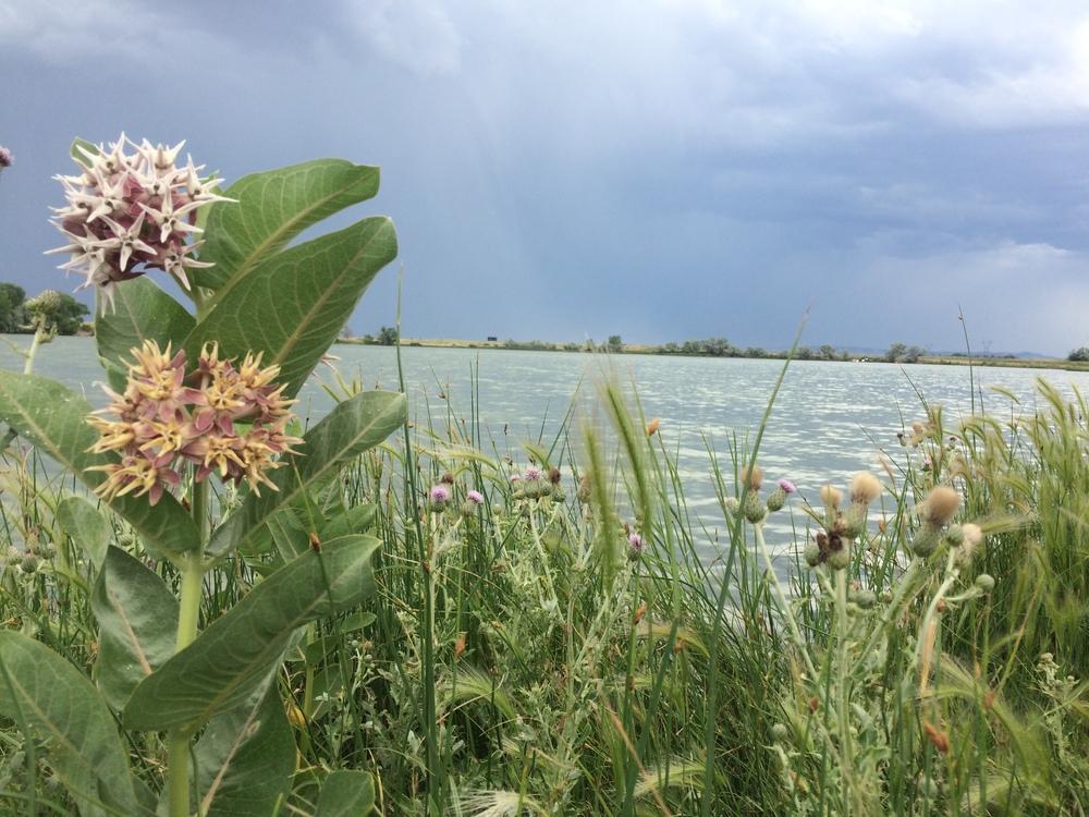 Packer Lake, Wyoming