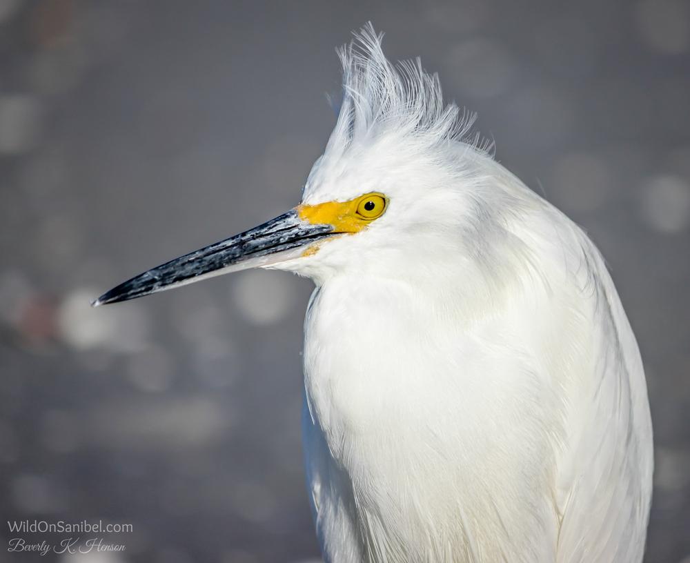 "I call this guy the ""Trump Bird""!"
