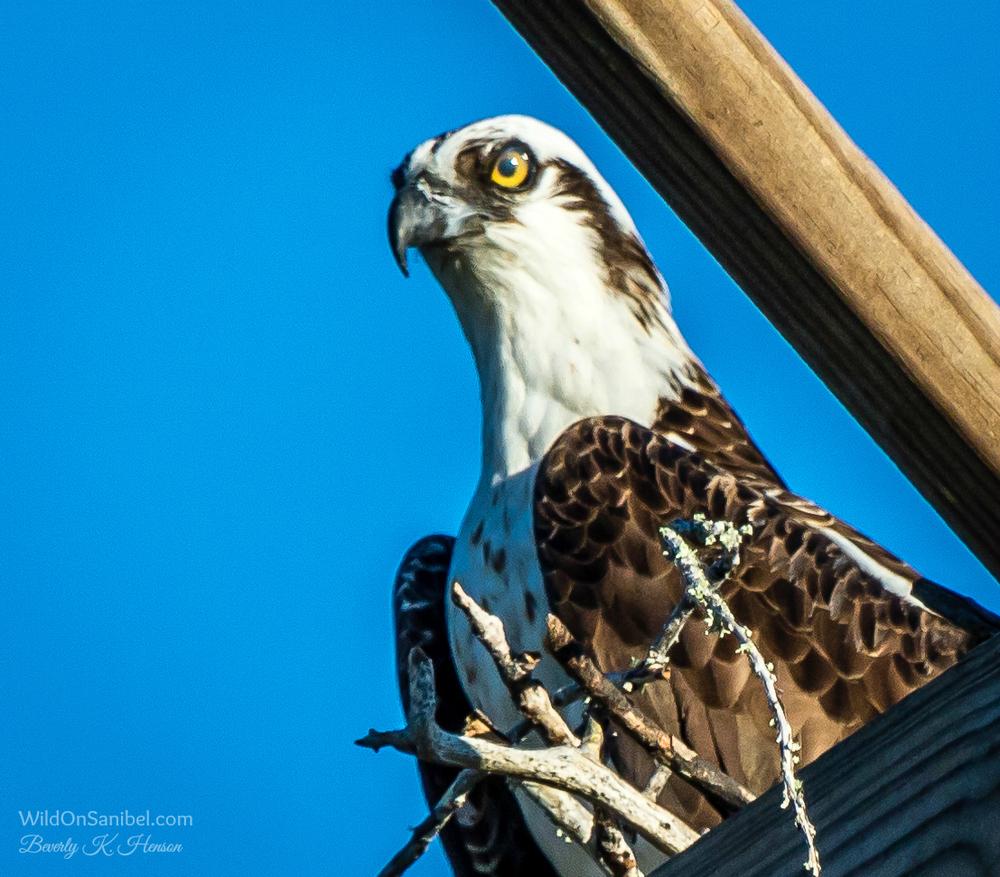 Yep, I'm watching you!!